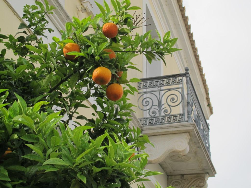 Der er fine pomerans træer overalt i byen. Det er fine frugter til syltning, da de er meget syrlige.