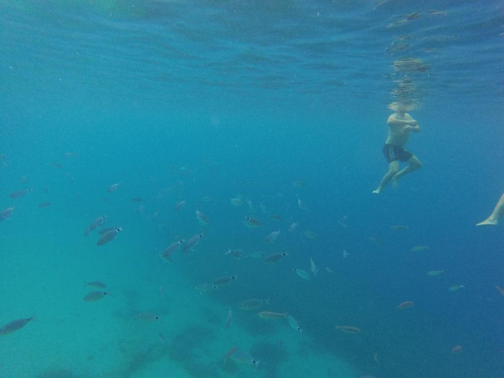 Der er masser af fisk rundt om os, når vi bader